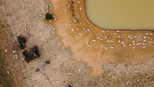 Cattle farm dam
