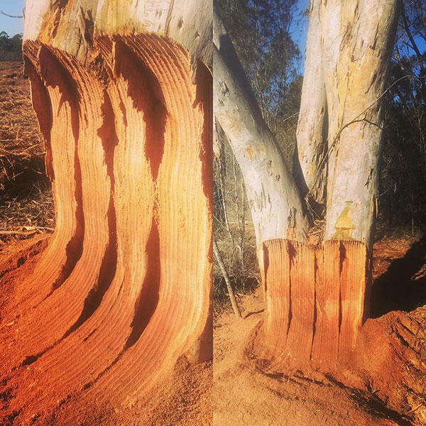 Advanced-Clearing-Excavation--tree-removal-Sydney