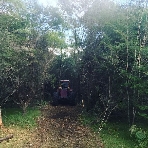 Advanced-Clearing-Excavation-tractor-equipment-trees-Sydney