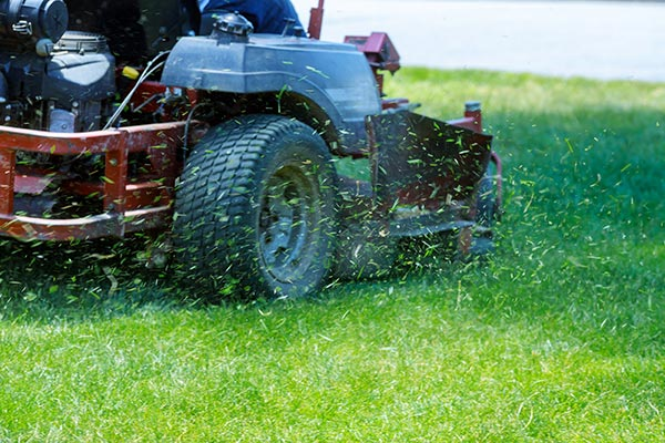 Advanced-Group-Garden-maintenance-3