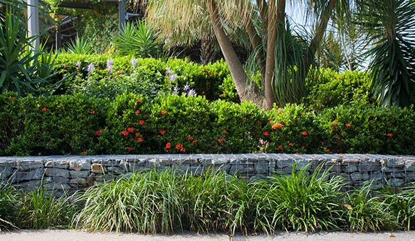 Advanced-Group-Landscaping-Trees-landscaping