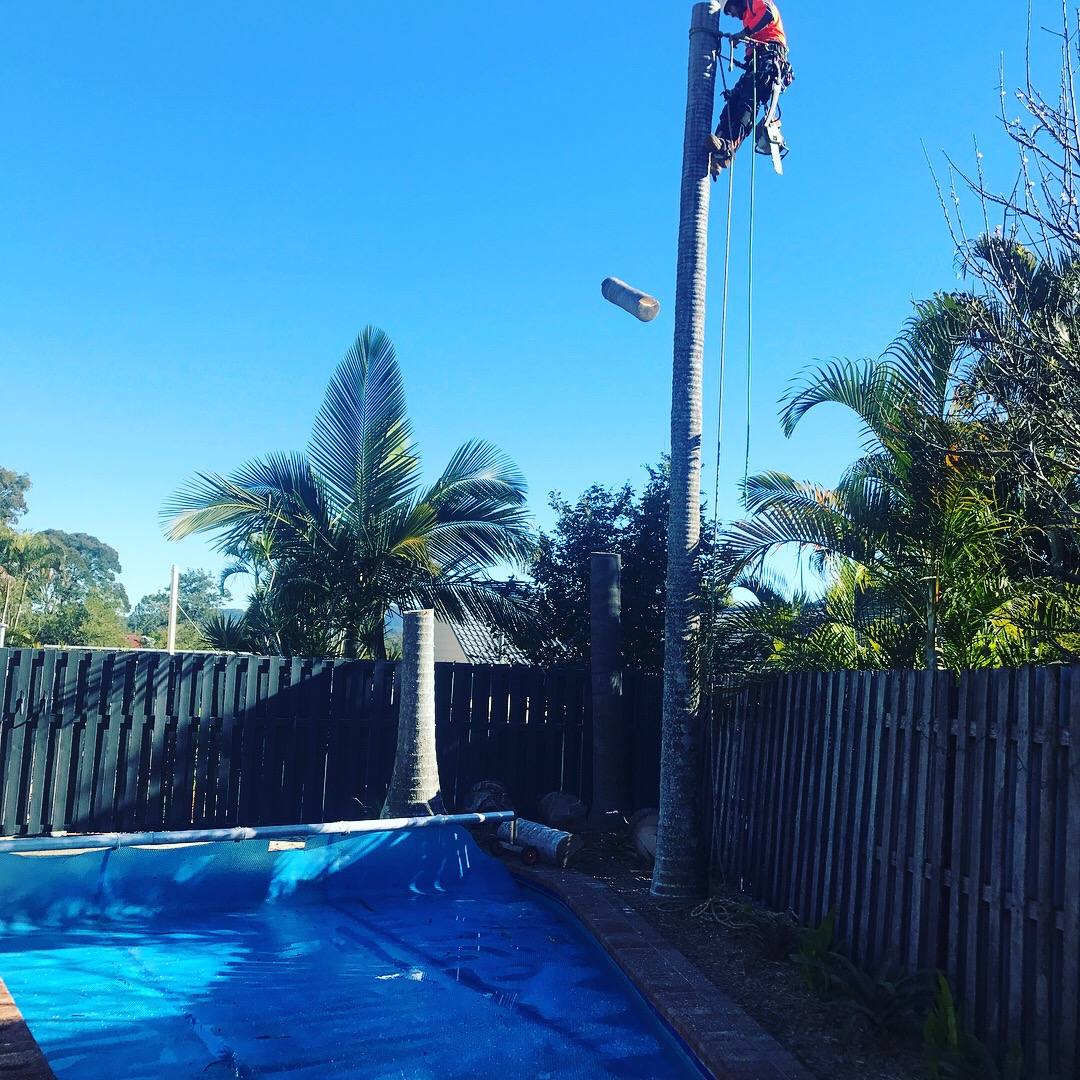 Arborspec - Arborist, Tree Removal and Climber Services - Brisbane