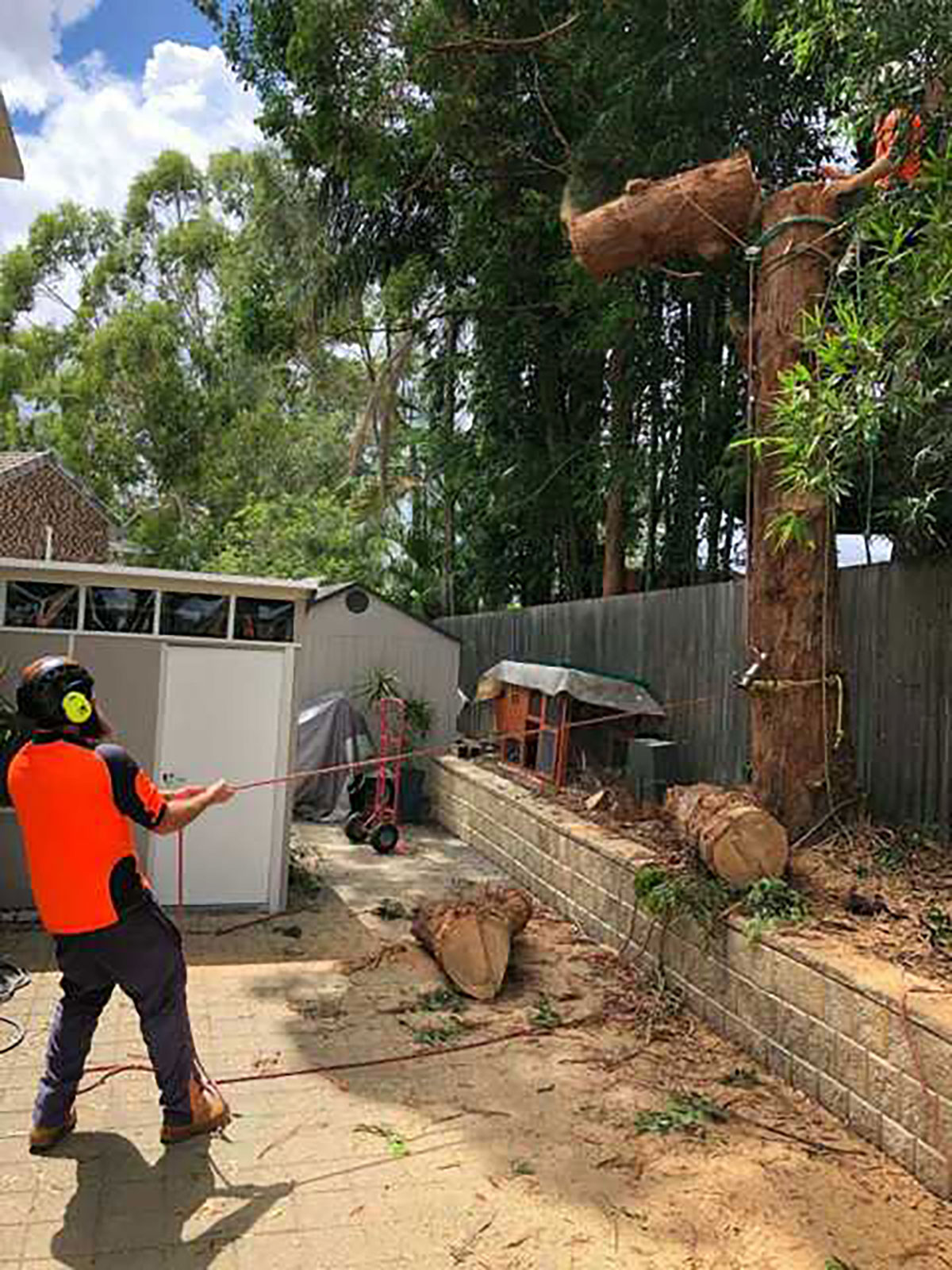 Arborspec - Tree Surgeon and Tree Cutting Service - Brisbane