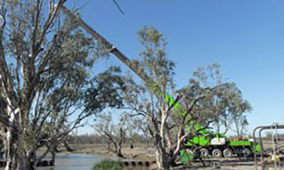 FWG-Contracting-Trimming-Tree-Services-Mildura