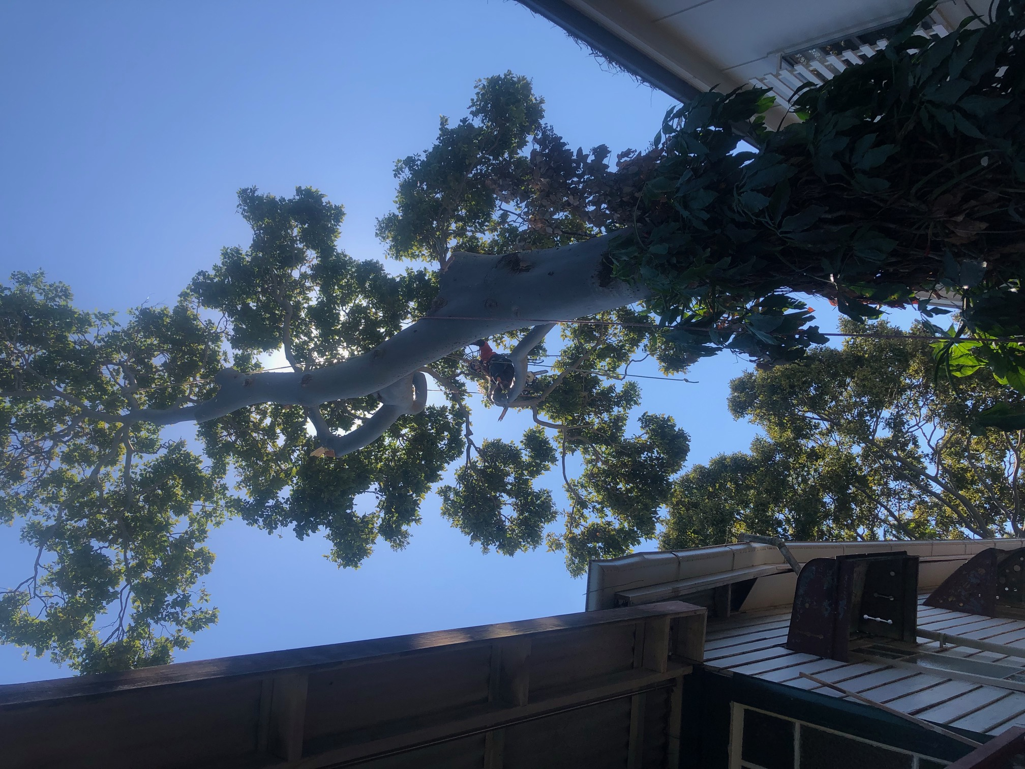 Confined space tree removal