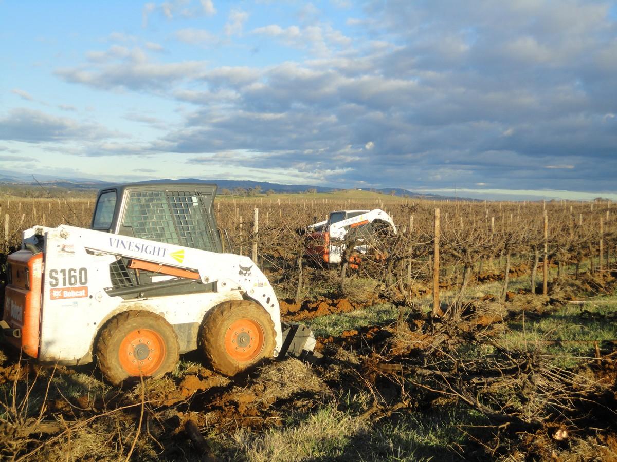 Vine Sight bobcat S160 on vine site