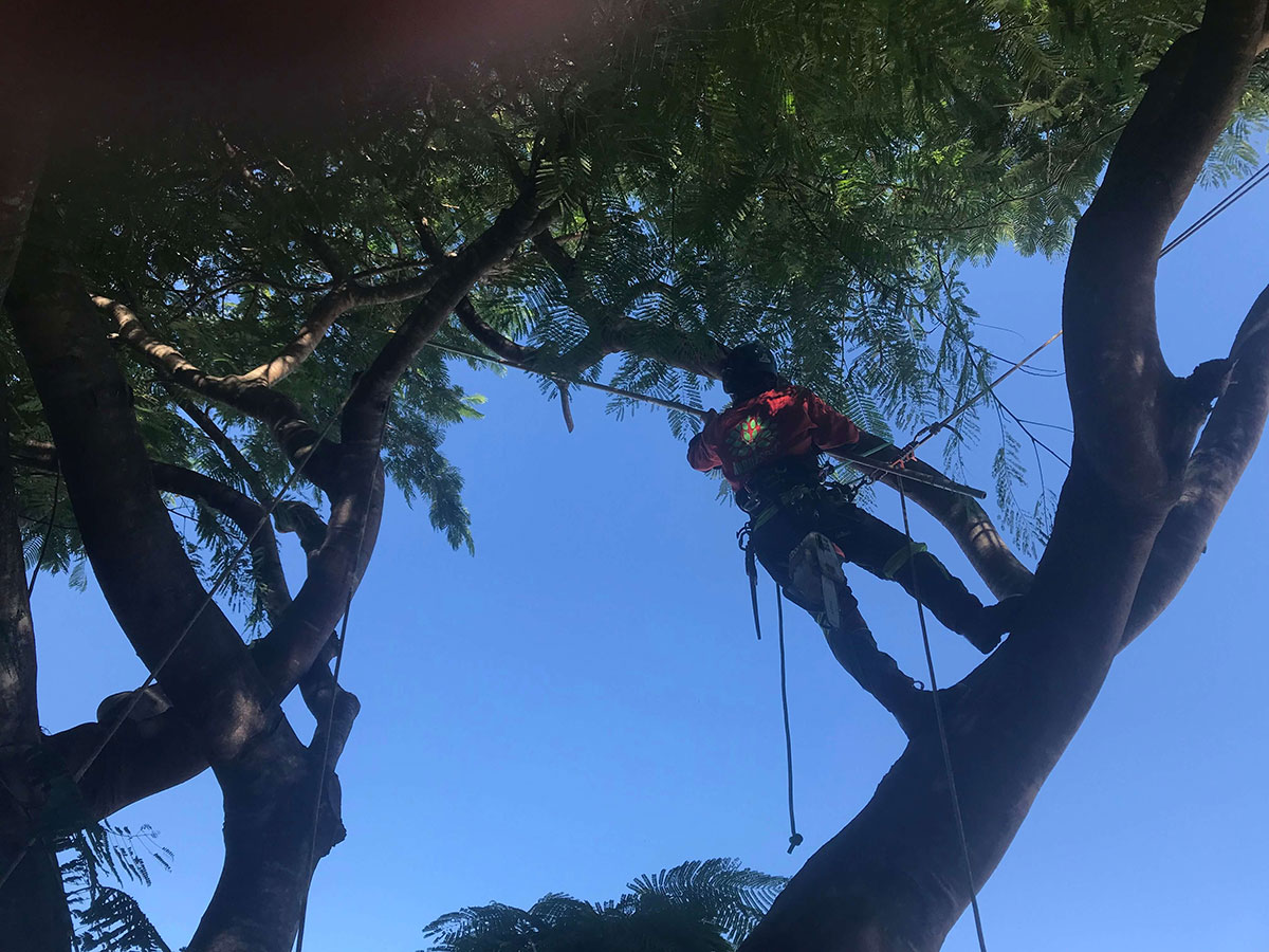 Working-at-heights-tree-lopping
