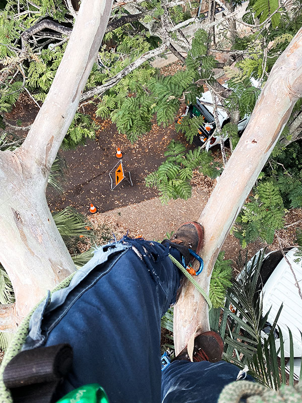 arborspec-commerical-arborists-brisbane-9