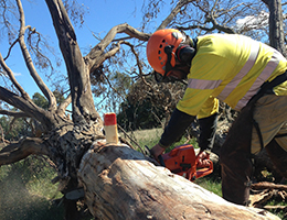 diggerman-training-chainsaw-safety-tree-felling