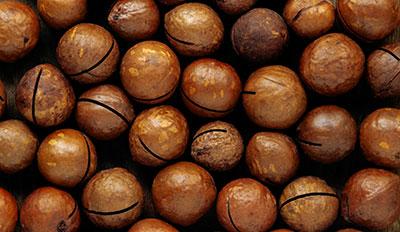 Hawe Earthmoving Macadamia Mounding Bundaberg