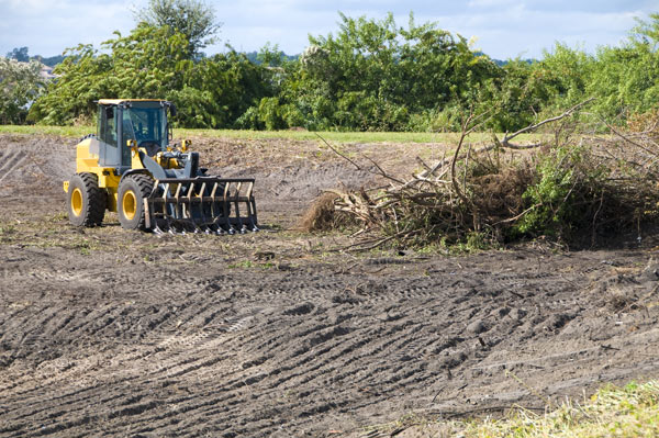 Land clearing for equine construction